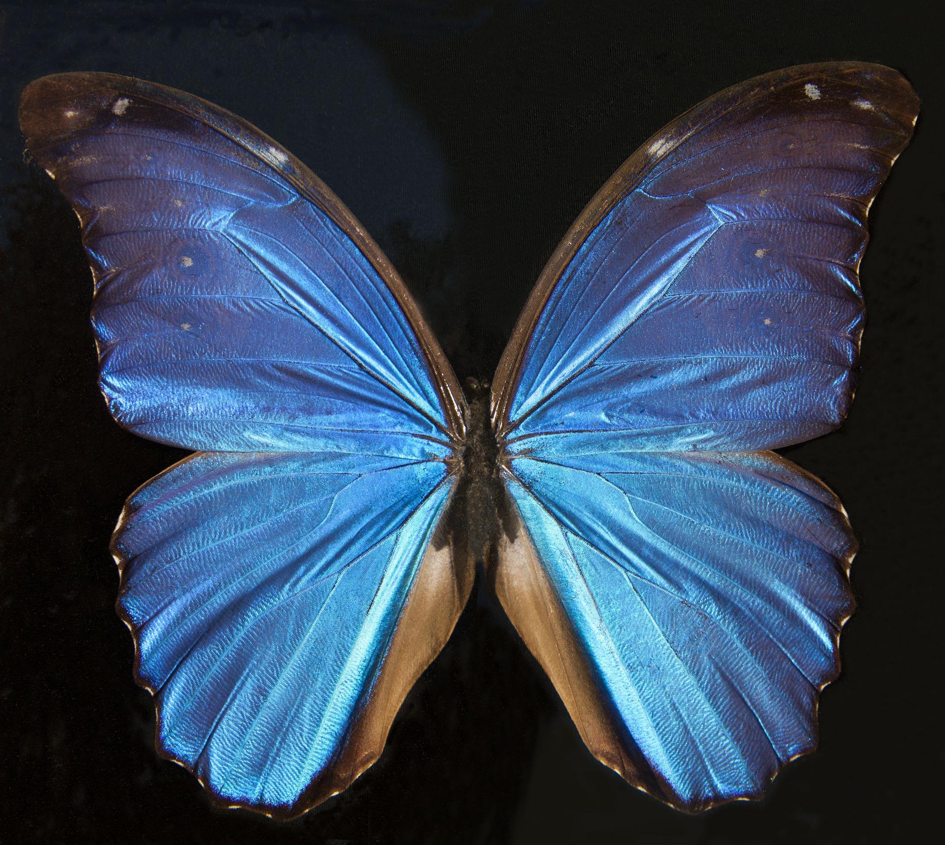 butterfly-67379_1920